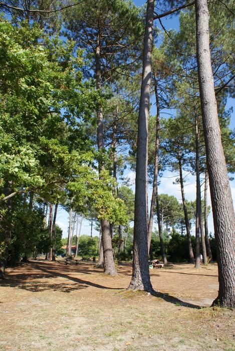 Papier Peint Vinyle Bois de pins - Plantes