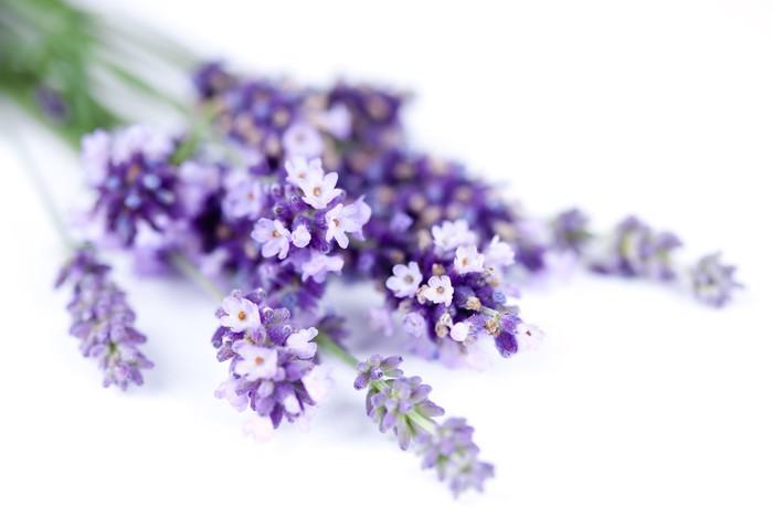 Fototapeta Winylowa Kwiaty lawendy - Uroda i pielęgnacja ciała