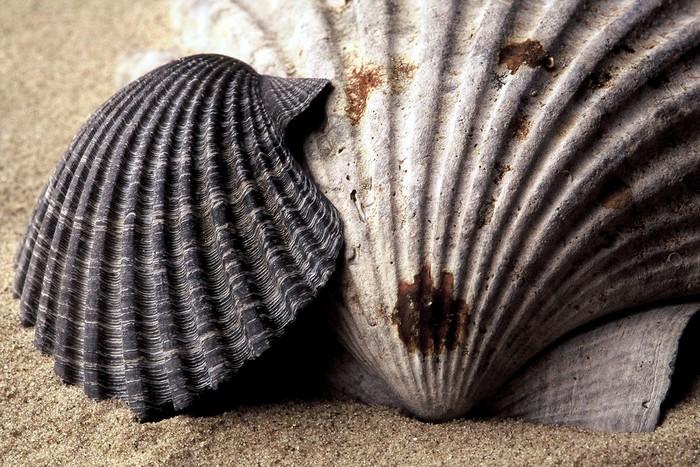 Vinylová Tapeta Mořské skořápky - Vodní a mořský život