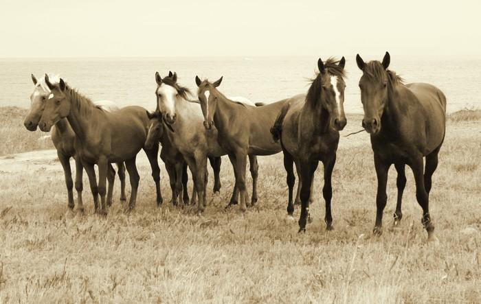 Vinylová Tapeta Divocí koně na pláži - Témata