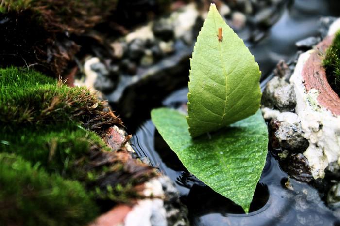 Tapeta Winylowa Nietrwały żeglarstwo - Rośliny