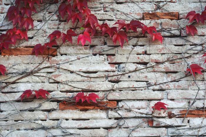 Vinylová Tapeta Mur d'automne - Domov a zahrada