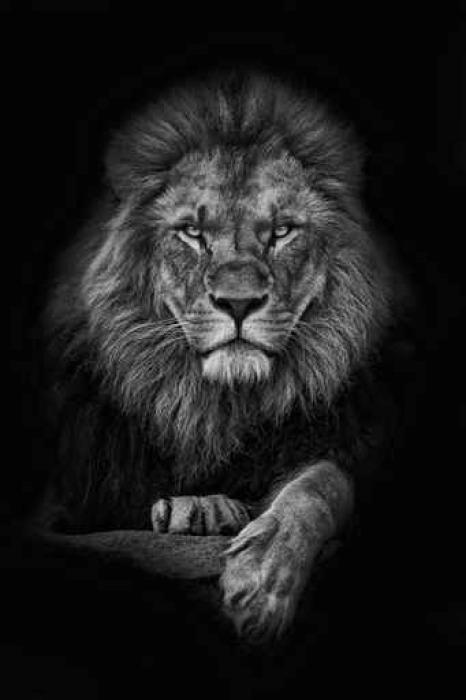 papier peint roi lion pixers nous vivons pour changer. Black Bedroom Furniture Sets. Home Design Ideas