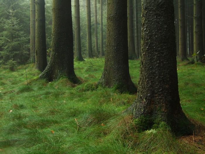 Vinylová Tapeta Wald - Stromy