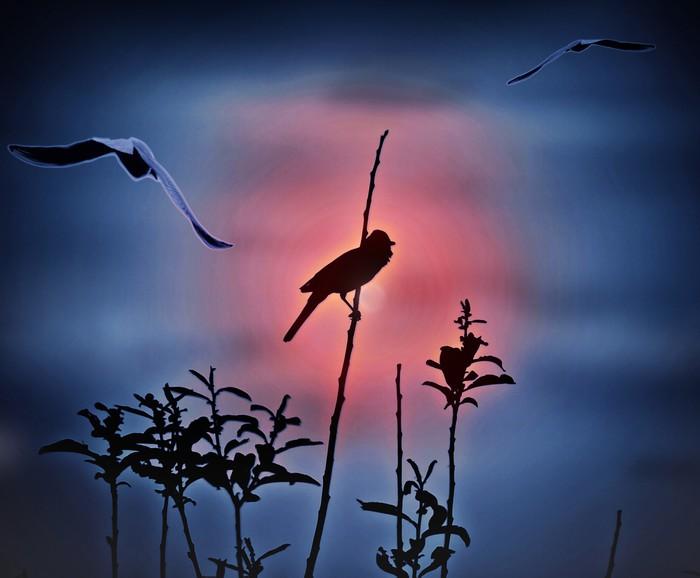 Vinylová fototapeta Abstraktní; ptáků při západu slunce - Vinylová fototapeta