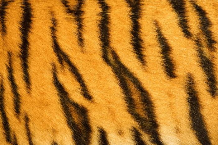 Pixerstick Aufkleber Tiger Fell Textur (real) - Reisen