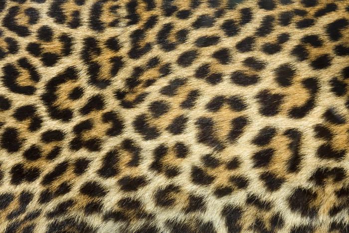 Pixerstick Aufkleber Leoparden Fell Textur (real) - iStaging