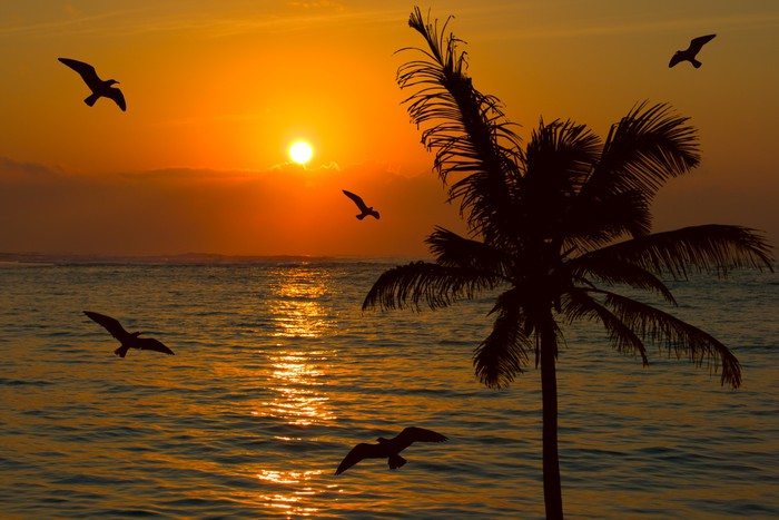 Vinylová Tapeta Tropické slunce scény - Prázdniny