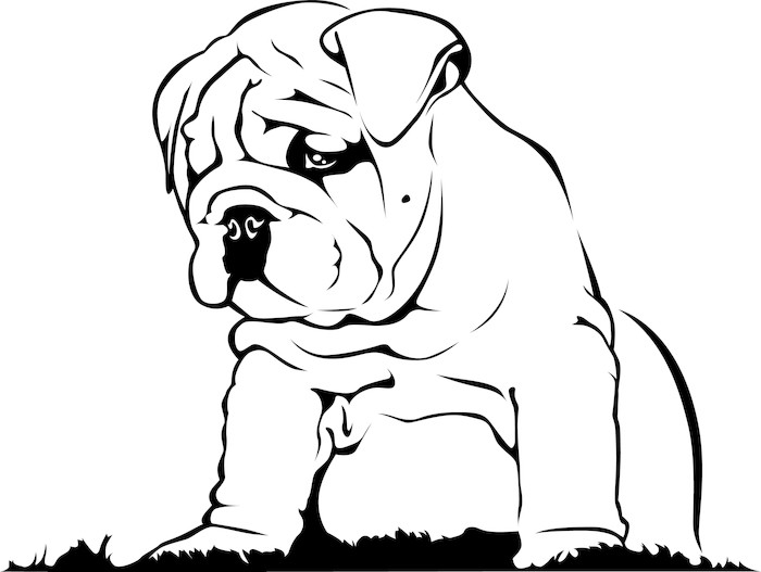 Vinilo Pixerstick Bulldog Inglés - Baby • Pixers® - Vivimos para cambiar