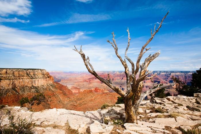 Vinylová Tapeta Mrtvý strom na okraji Grand Canyonu - Pouště