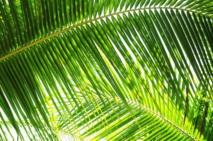 papier peint palmier dans le soleil pixers nous vivons pour changer. Black Bedroom Furniture Sets. Home Design Ideas