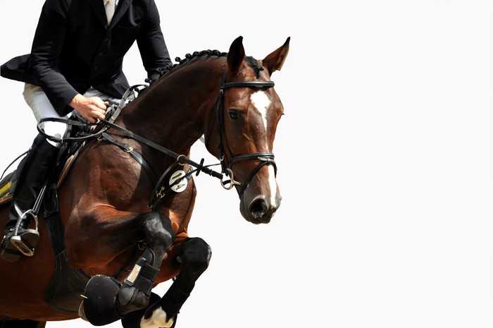Reitsport, Pferdesport, Reiten, Springreiten, Hürdenspringen Vinyl Wallpaper - Success and Achievement
