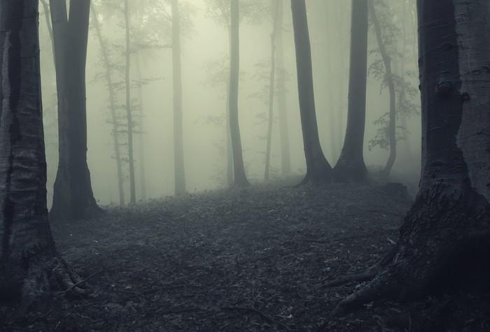fototapete nebel im dunklen wald pixers wir leben um zu ver ndern. Black Bedroom Furniture Sets. Home Design Ideas