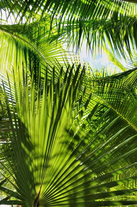 papier peint green palm jungle pixers nous vivons pour changer. Black Bedroom Furniture Sets. Home Design Ideas