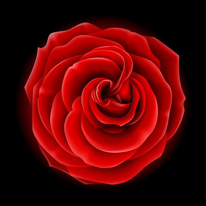 Beautiful Red Rose Symbol Of Love And Passion Wall Mural Pixers