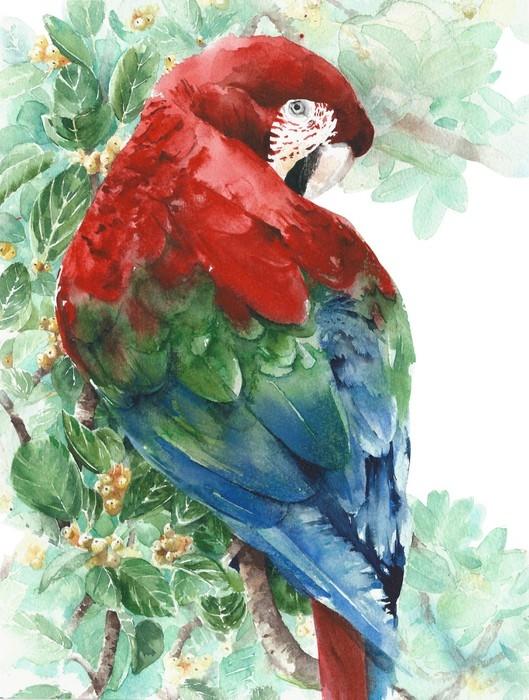 papier peint perroquet ara rouge vert bleu oiseau assis sur l 39 illustration de peinture aquarelle. Black Bedroom Furniture Sets. Home Design Ideas