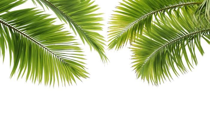 sticker feuilles de palmier sur fond blanc pixers nous vivons pour changer. Black Bedroom Furniture Sets. Home Design Ideas