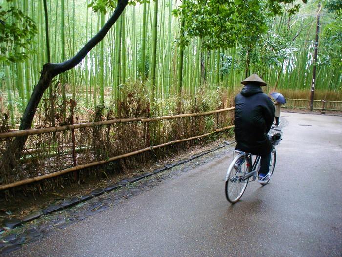 Vinylová Tapeta Bambusový les - Asie