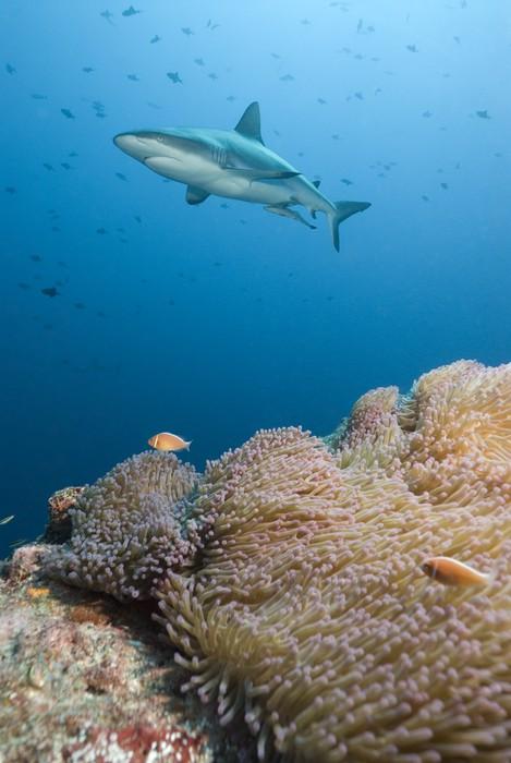 fototapete shark kreuzfahrten ber korallenriff pixers wir leben um zu ver ndern. Black Bedroom Furniture Sets. Home Design Ideas