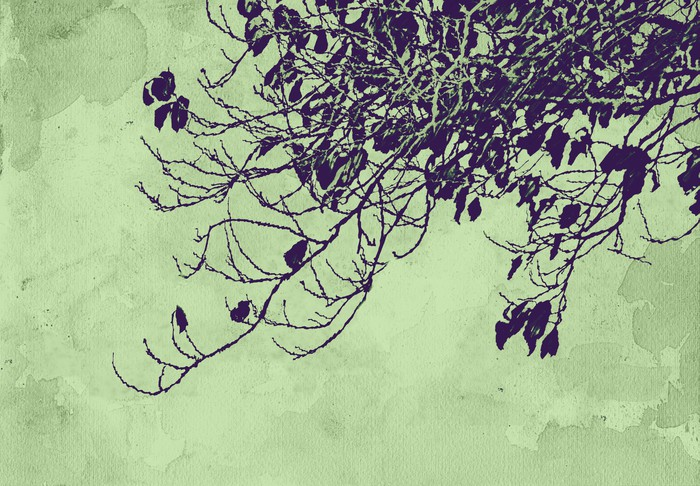 Vinylová Tapeta Naturaleza vintage grunge ekologie - Rostliny