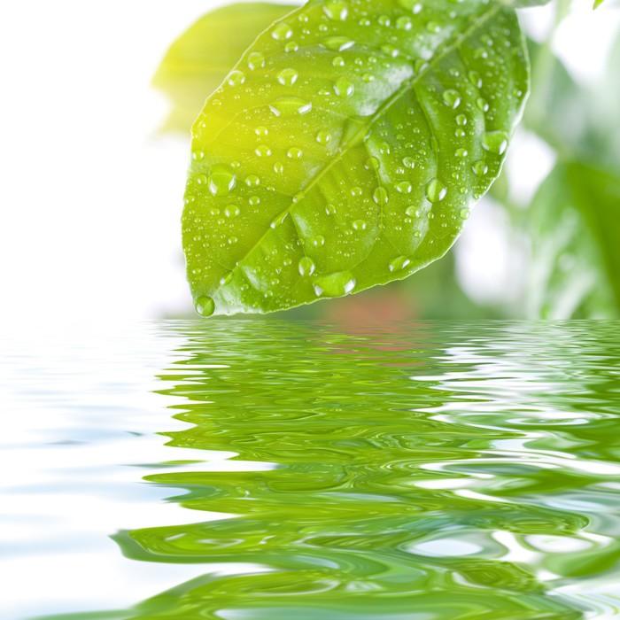 Carta da parati congedo verde pixers viviamo per il for Carta parati verde