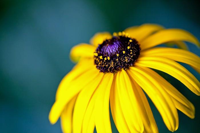 Vinyl Fotobehang Mooie gele bloem op een groen veld - Bloemen