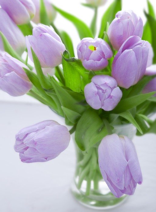 fototapete lila tulpen pixers wir leben um zu ver ndern. Black Bedroom Furniture Sets. Home Design Ideas