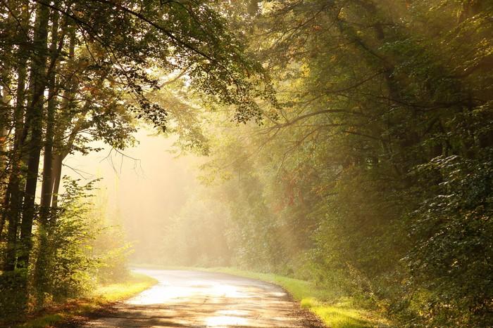 Vinylová Tapeta Vycházející slunce osvětluje podzimní listí stromů - Roční období