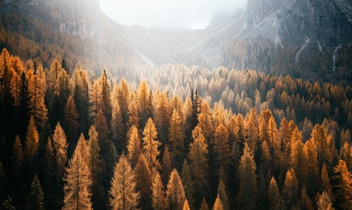 Vinyl-Fototapete Tolle Aussicht auf die gelben Lärchen. Nationalpark Tre Cime di Lavaredo, Dolomitialpe, Tirol, Italien. - Landschaften