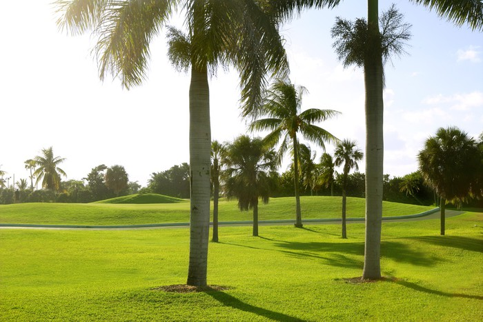 Nálepka Pixerstick Miami Key Biscayne Golf tropický pole - Prázdniny