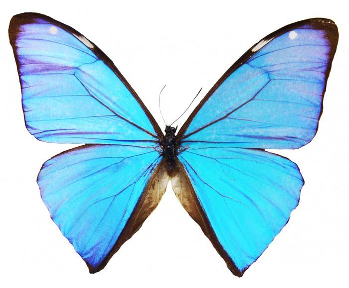 papier peint motifs papillon bleu pixers nous. Black Bedroom Furniture Sets. Home Design Ideas