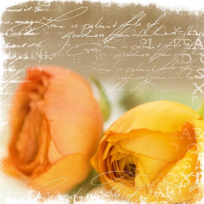 Vinylová Tapeta Ranunculus a ilustrace - Květiny