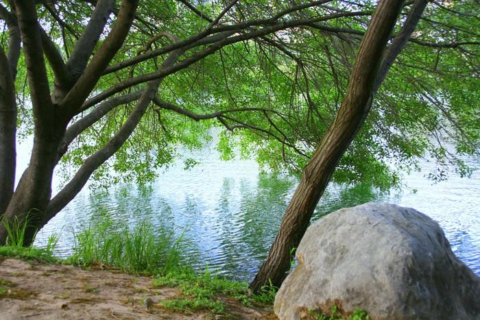 Vinylová Tapeta Stromy na město jezera, Austin, TX - Roční období