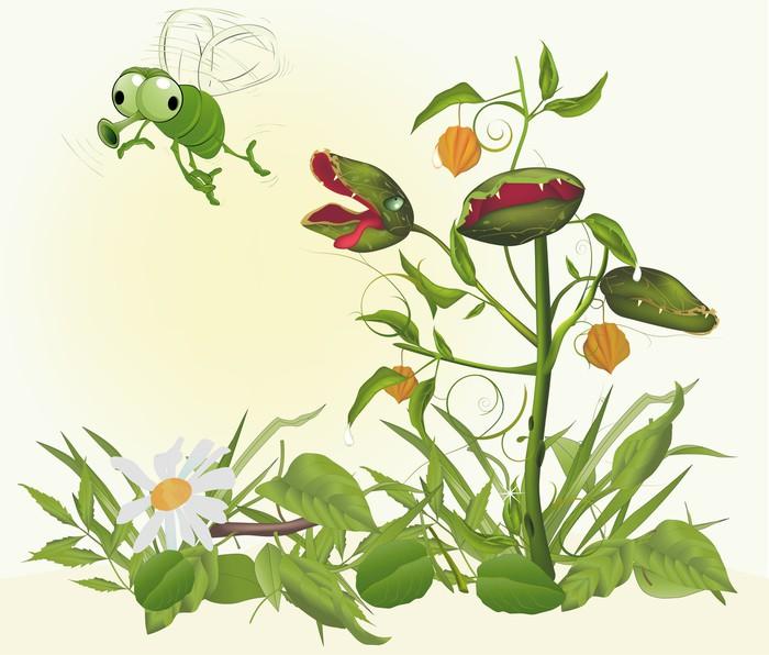 papier peint plante pr datrice attraper un insecte pixers nous vivons pour changer. Black Bedroom Furniture Sets. Home Design Ideas