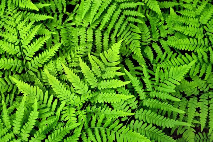 Vinylová Tapeta List rostliny - Rostliny