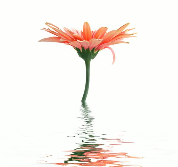 Tableau sur Toile Fleur rose. réflexion -