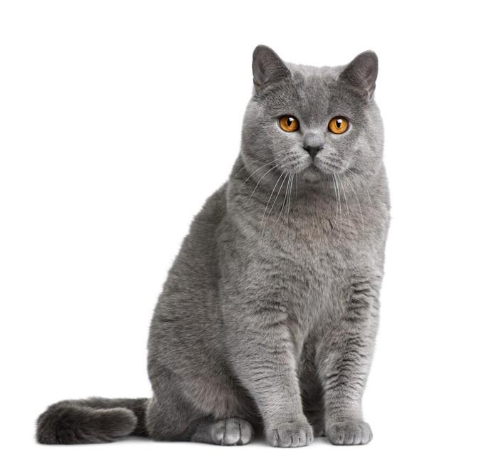 Resultado de imagen de gato sentado