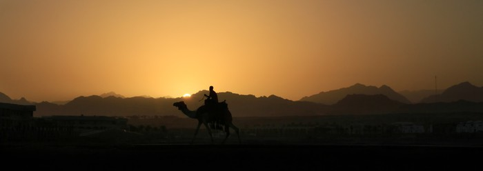 Vinylová Tapeta Camel při západu slunce v Sinai hory - Afrika