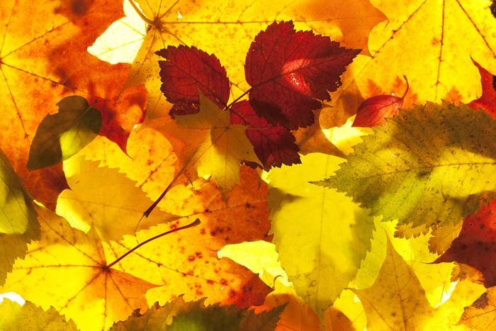 Vinylová Tapeta Podzimní listí zblízka pozadí - Roční období