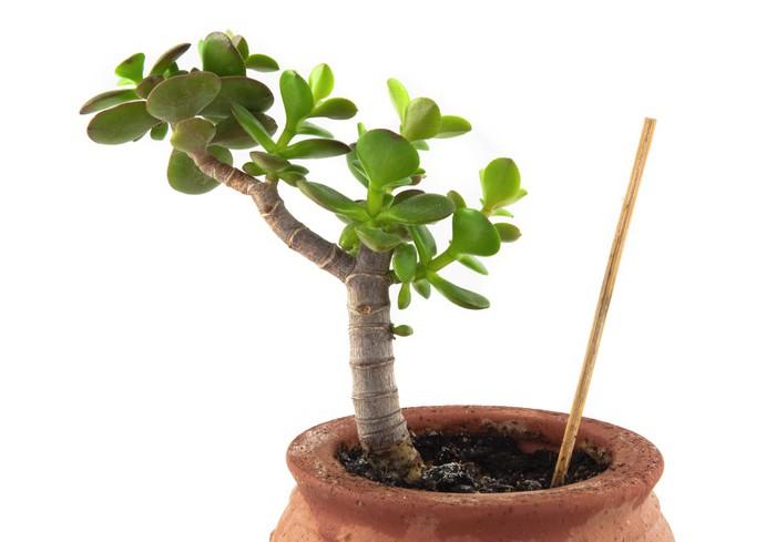 papier peint plante grasse pixers nous vivons pour changer. Black Bedroom Furniture Sets. Home Design Ideas