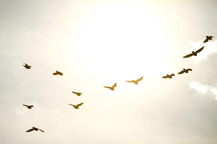 Vinylová Tapeta Ptáci - Ptáci