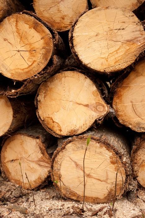 Vinylová Tapeta Mladá uprchlý stromu roste poblíž hromadu kulatiny - Struktury