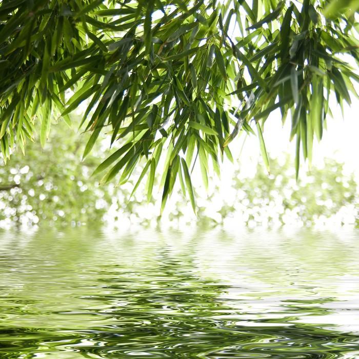Tableau sur Toile Reflets de feuilles de bambous - Thèmes