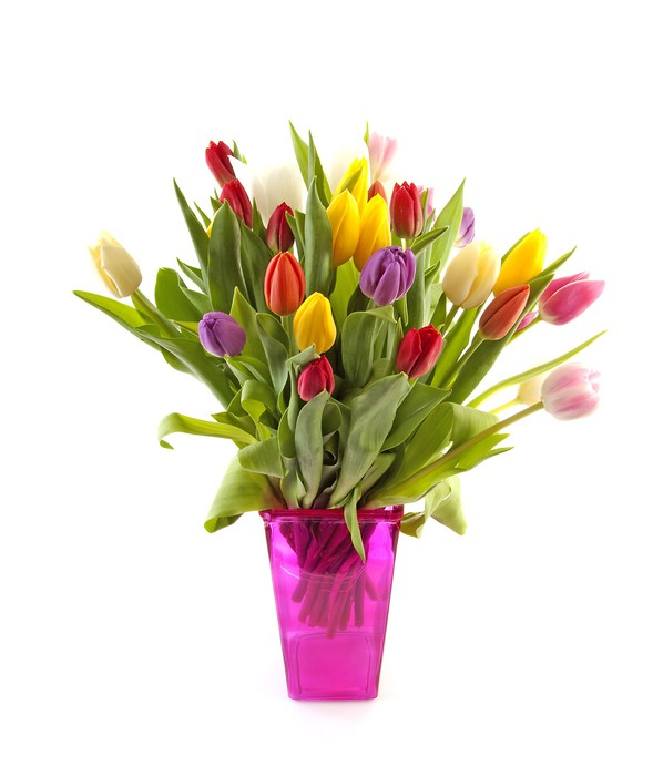 Colorul Dutch Tulips In Pink Vase Over White Background Wall Mural