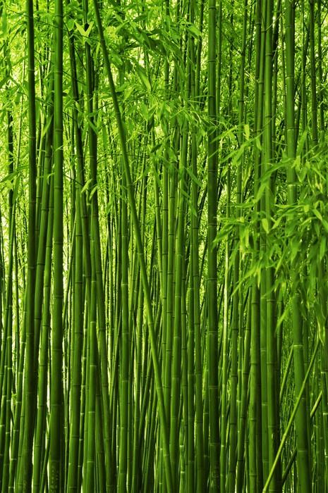 Tableau sur Toile Texture forêt de bambous - Thèmes