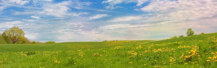 Vinylová Tapeta XXL panorama louka s květinami a modrou oblohu - Outdoorové sporty