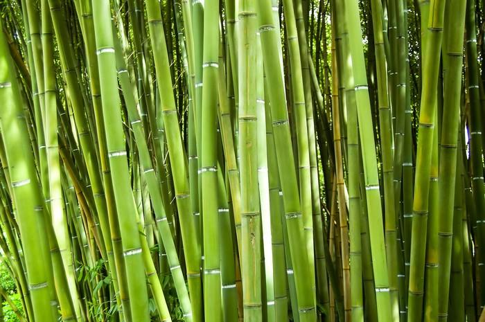papier peint bambou pixers nous vivons pour changer. Black Bedroom Furniture Sets. Home Design Ideas