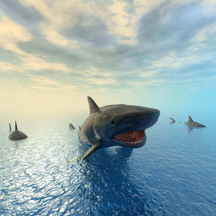 Vinylová Tapeta Tiger Shark plavání - Žraloci