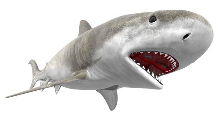 Schrankaufkleber Tigerhai • Pixers® - Wir leben, um zu verändern