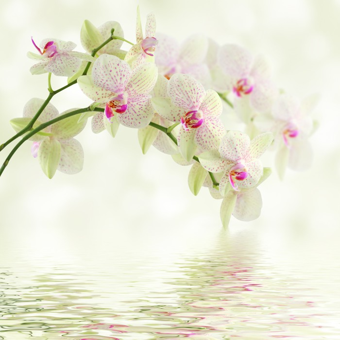 White orchid on a light background Vinyl Wall Mural - Themes